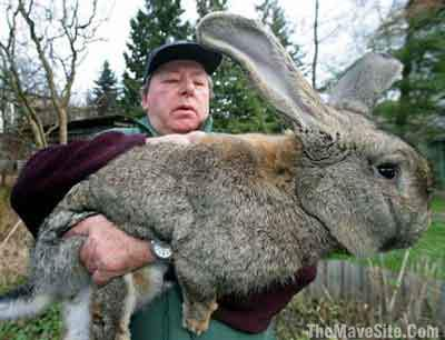 Tms Big Bunnies